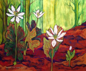 "Bloodroot Sanguinaria canadensis12"" x 14"""