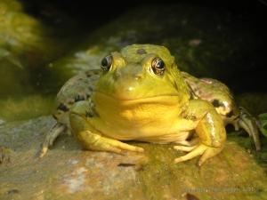 FrogBlog2